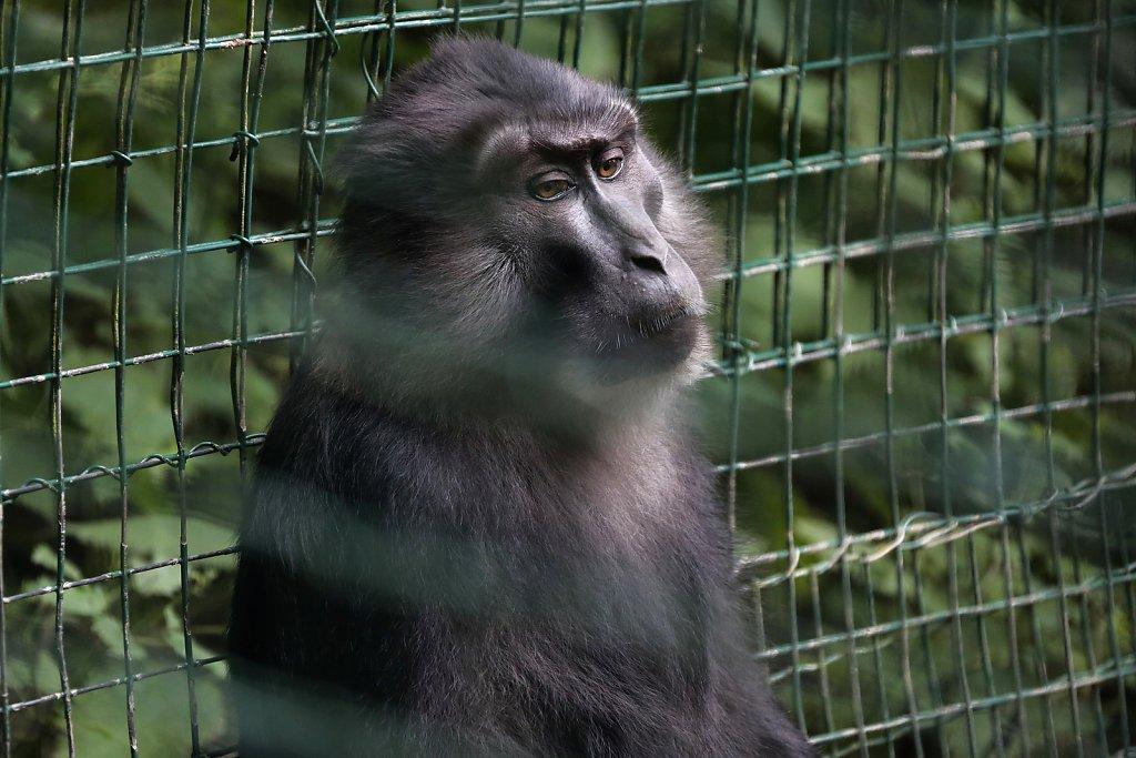 rescued monkeys